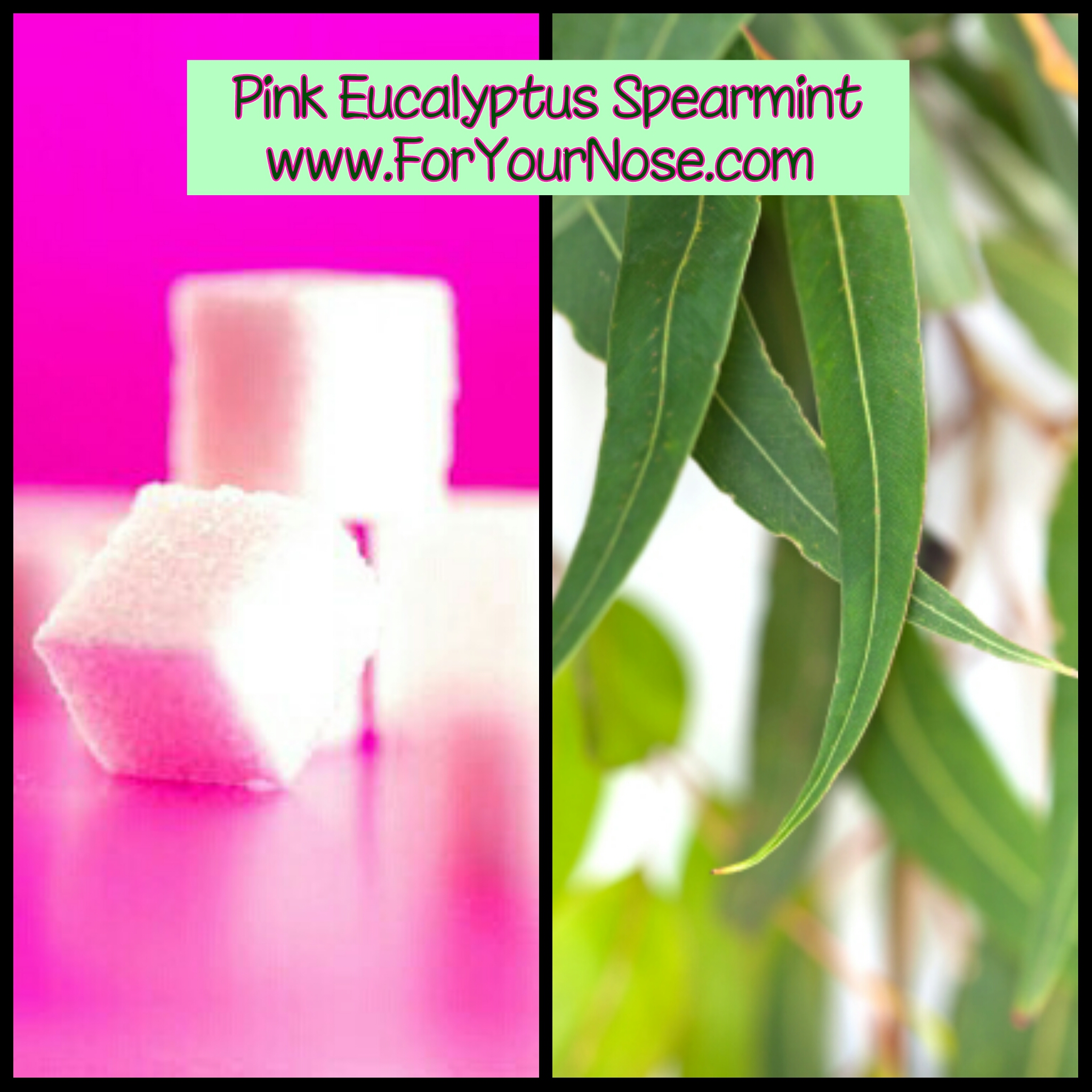 pink eucalyptus spearmint fragrance