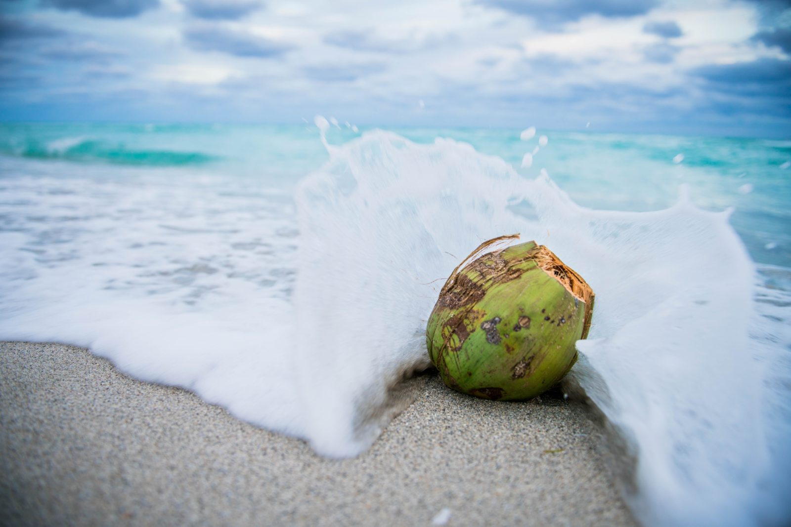 coconut coast fragrance
