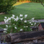 Part of the train garden showing the log trains pass through, a bridge, and a flowering shrub with white blooms.