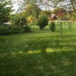 Weeping Willow Tree with lawn and garden plantings