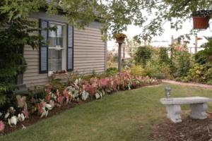 The Romance Garden with caladium