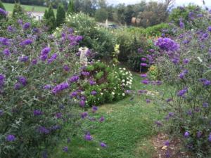 Butterfly Garden, Summertime