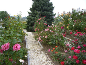 Part of Main Rose Garden and pathway