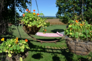 Hammock for Two at Pergola with Nasturtium baskets