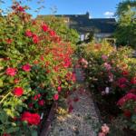 Rose Garden path with Inn in background