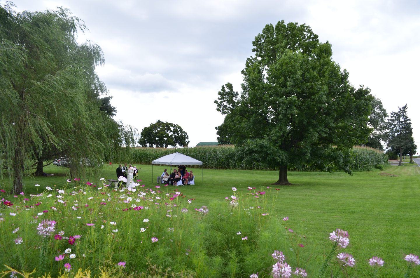 Outdoor wedding with beautiful green lawn, cornfield in background, colorful flowers from garden in foreground