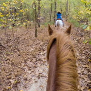horseback trail ride, shows two horses and one rider