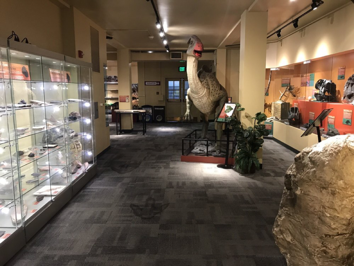 Inside museum showing dinosaur relics