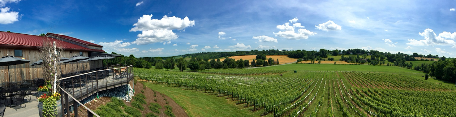 sweeping view of large vineyard