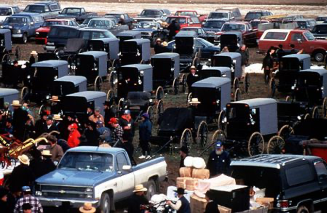a gathering of Amish buggies