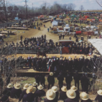 sweepng scene of large Amish livestock auction
