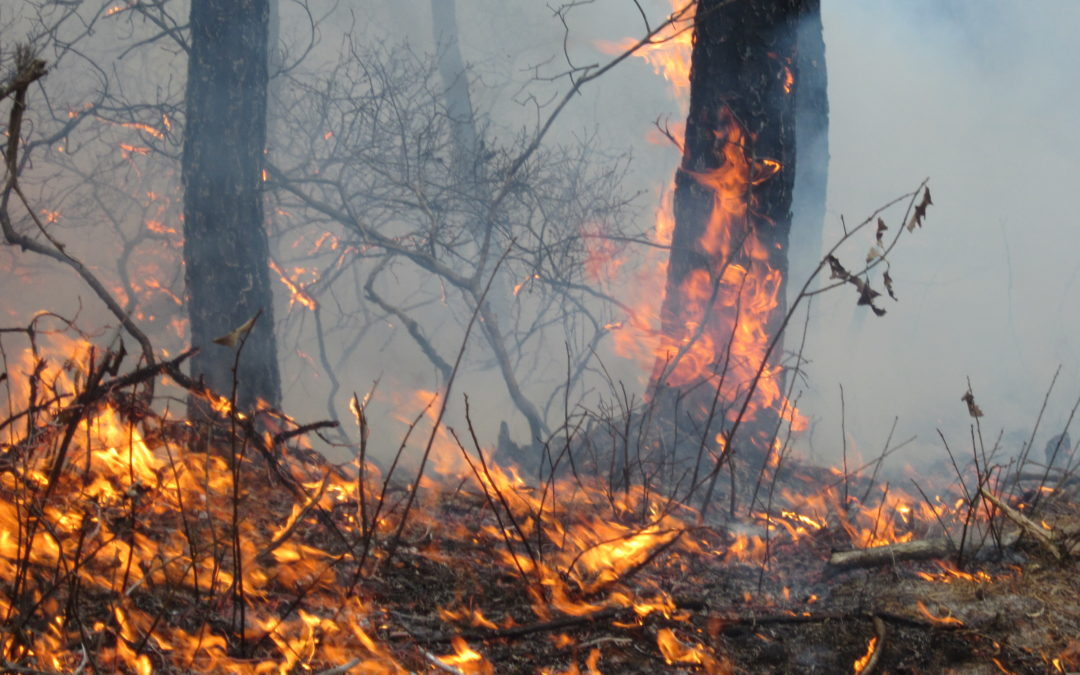 Is There a Burn Ban in Nashville? What You Need to Know About Fire in Davidson County