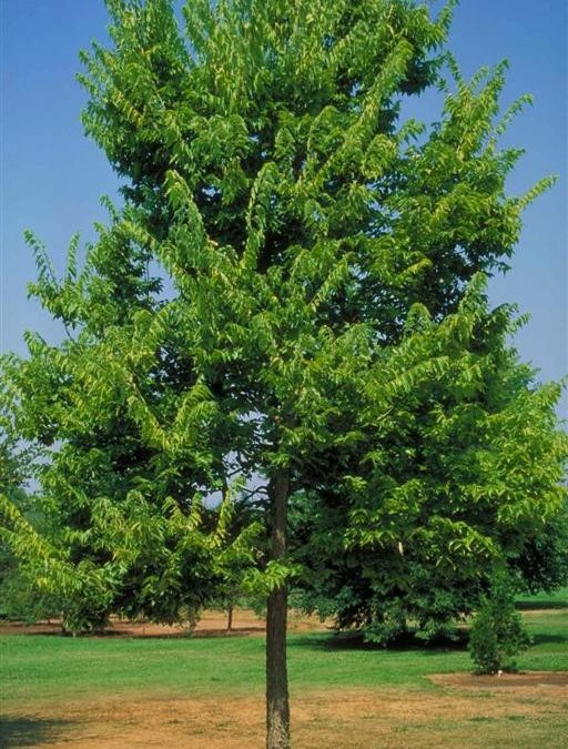 Trees for Middle Tennessee