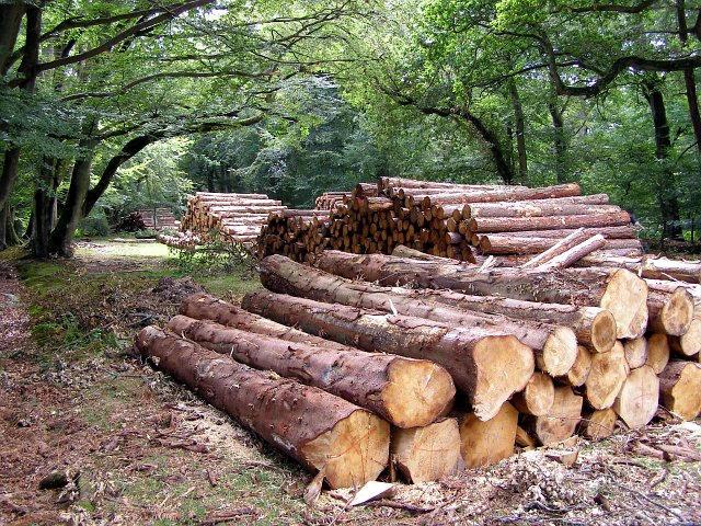 How to Sell Timber in Tennessee