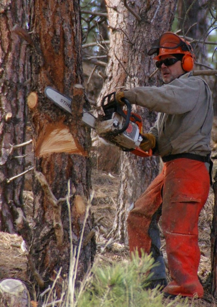Choosing and maintaining chainsaws
