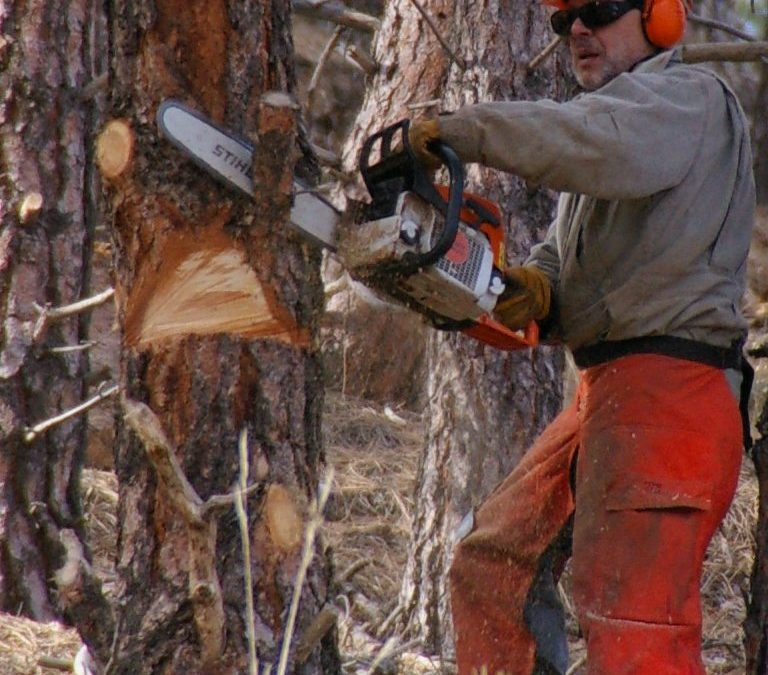How to Select and Maintain a Chainsaw