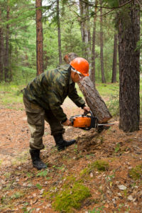How to Clear Land by Hand with a Chainsaw