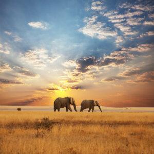 Kenya | Tanzania & Eastern Africa