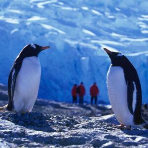 Antarctic & Arctic