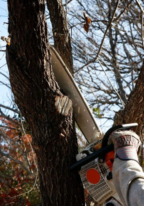 Tree Trimming Services - American Tree Services - Panama City Florida Tree Services
