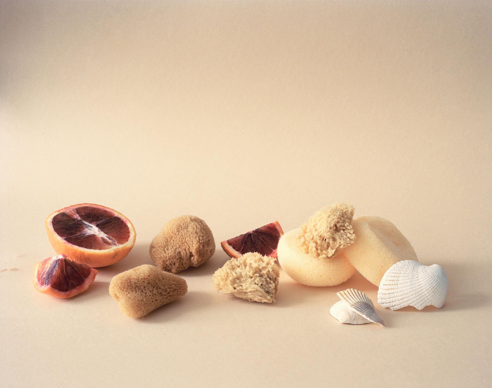 Sponges, seashells, blood orange (pour F.Ponge)
