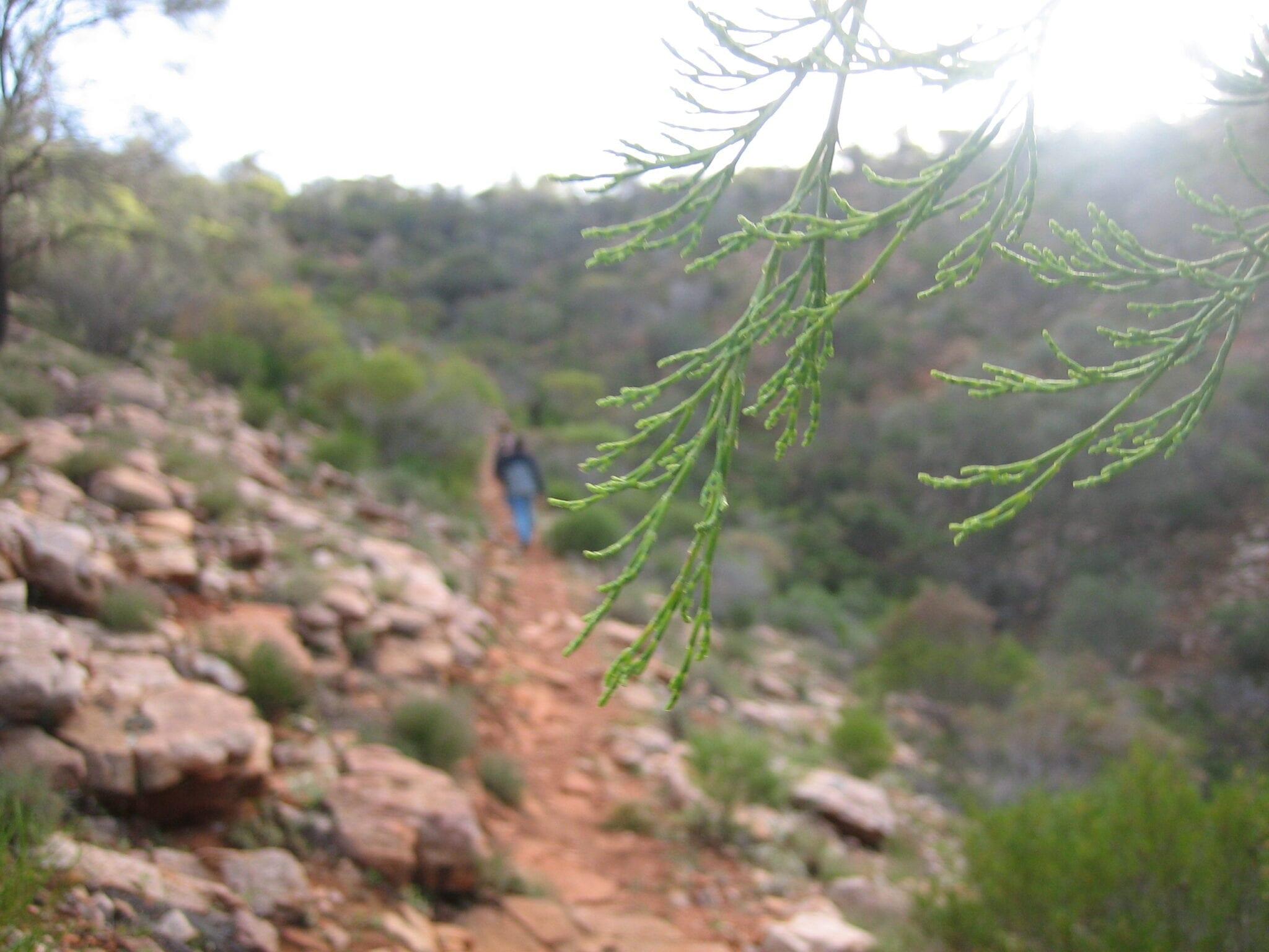 Travelling Between Renmark & Mambray Creek, South Australia