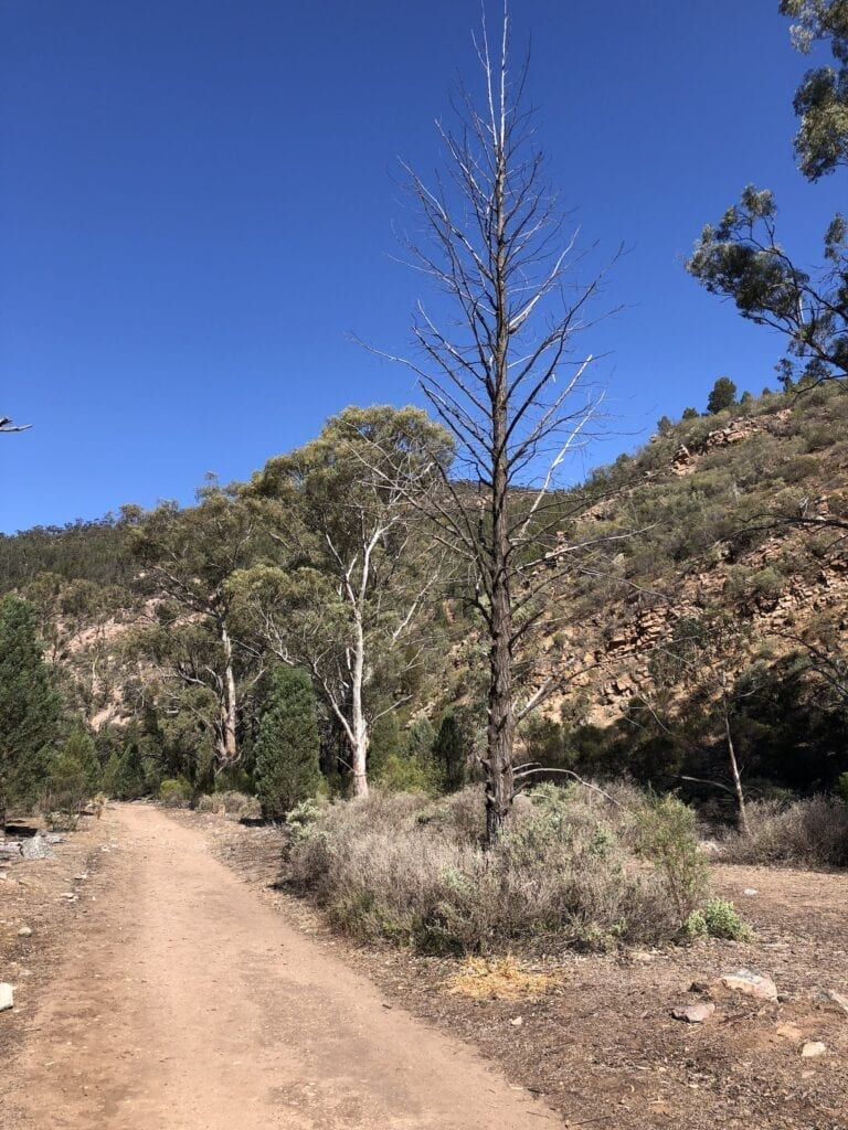 The Mambray Valley Hike in drier times.