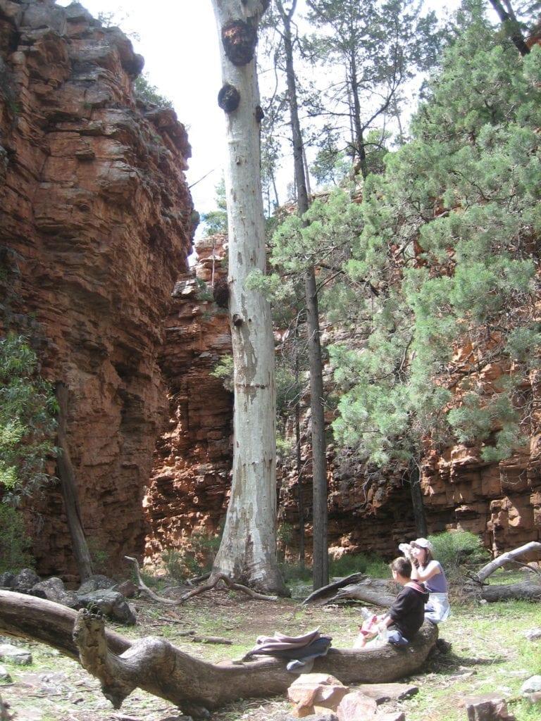 Hidden Gorge Walk, Mt Remarkable National Park South Australia