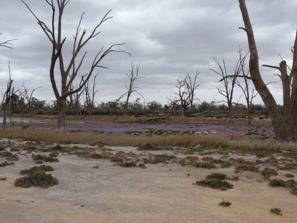 Banrock Station Wetlands South Australia