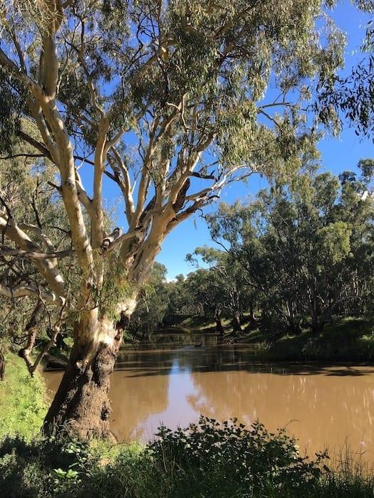 Lachlan River Gum Bend Lake Condobolin NSW