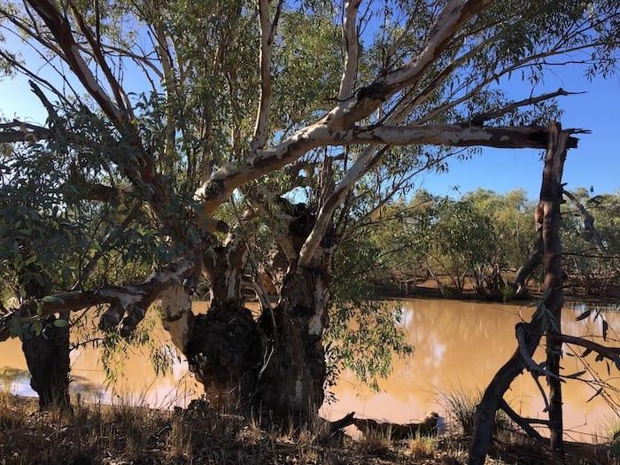 Camping Paroo River