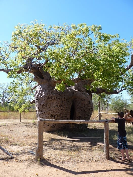 Boab Prison Tree, Derby, Western Australia