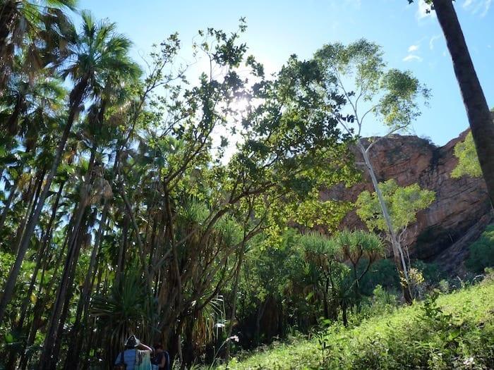 Lush vegetation on the walk to Zebedee Springs. El Questro Station Kimberleys.