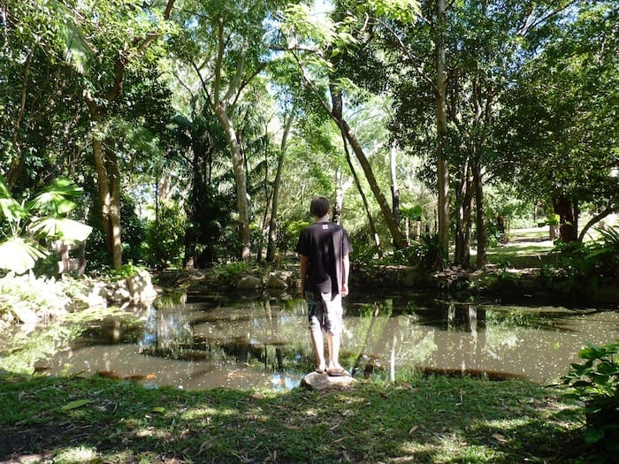 Cooktown Botanic Gardens have been restored to their former glory.