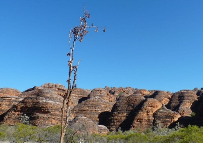 Beehive domes of the Bungle Bungles, Purnululu National Park.