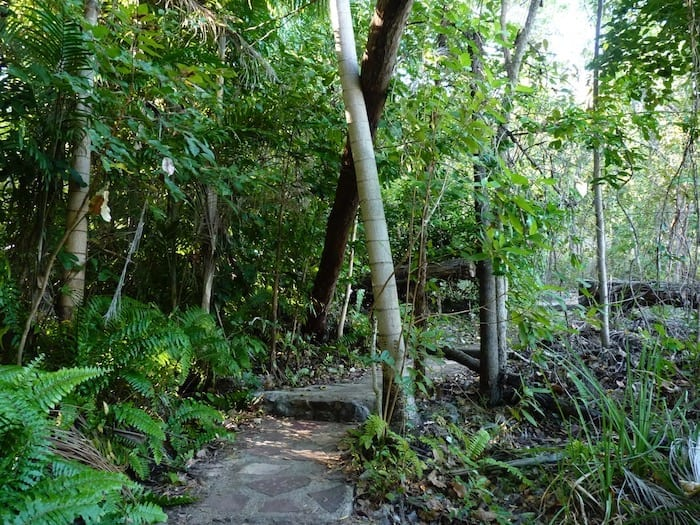 Rainforest walk at Wangi Falls, Litchfield National Park.