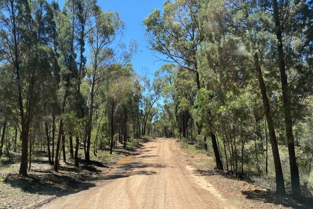 Driving in through the bush on the dirt road to the campgrounds at Goulburn River National Park.