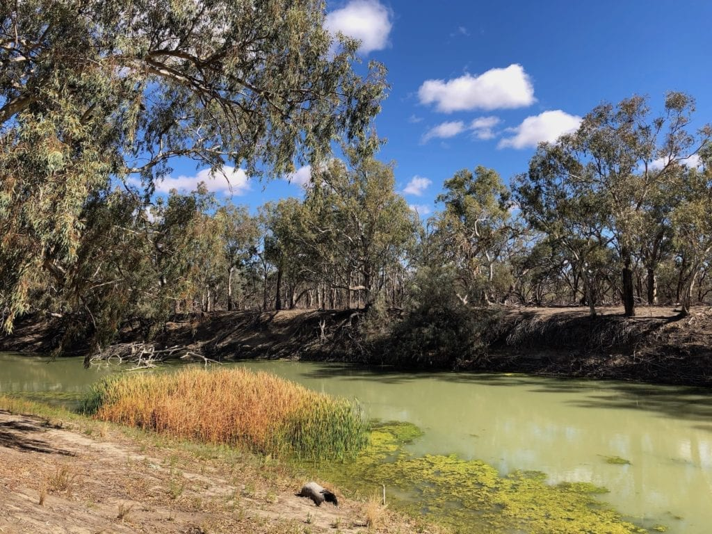The Darling River at Pooncarie is a horrible green slime.