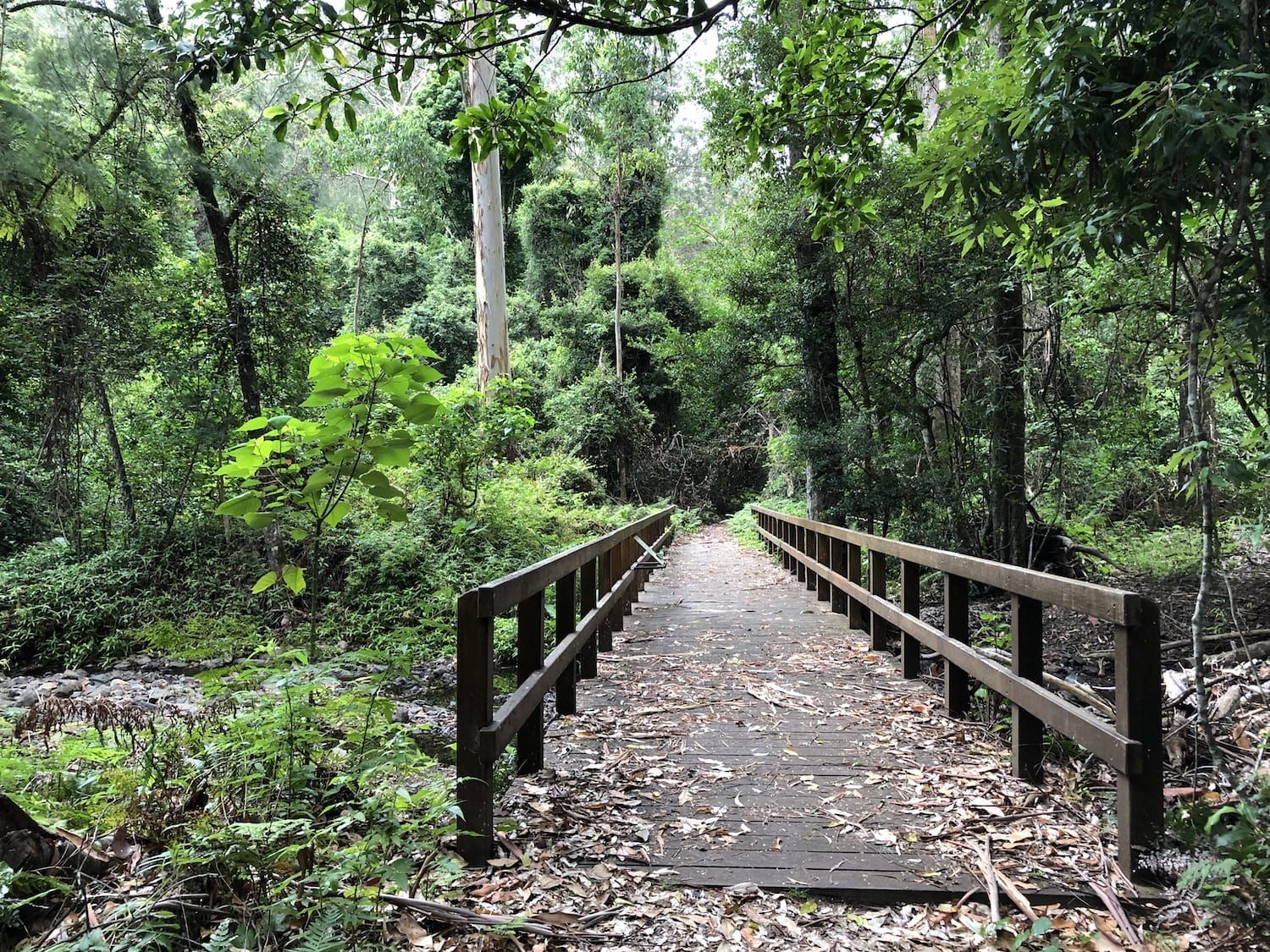 The Dalrymple walk starts at Manna Gum campground. It gives you a taste of the rainforest.