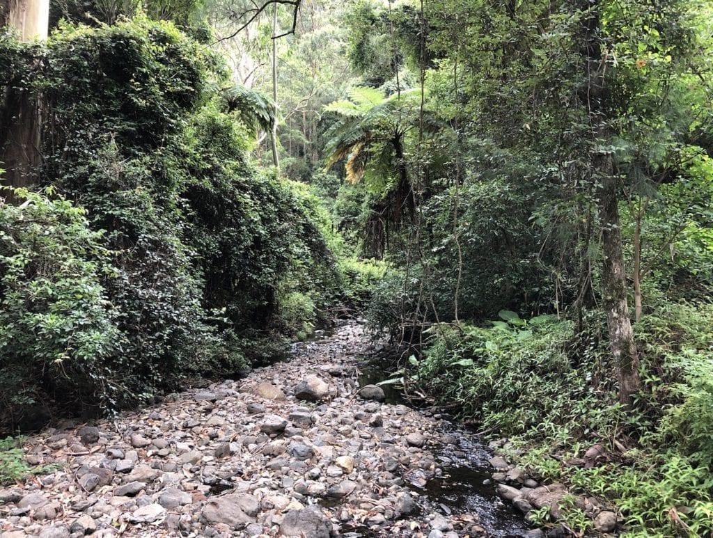 Dalrymple Creek near Manna Gum campground.
