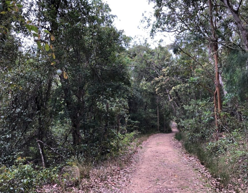 The Dalrymple Circuit walk is an easy walk from Manna Gum campground.