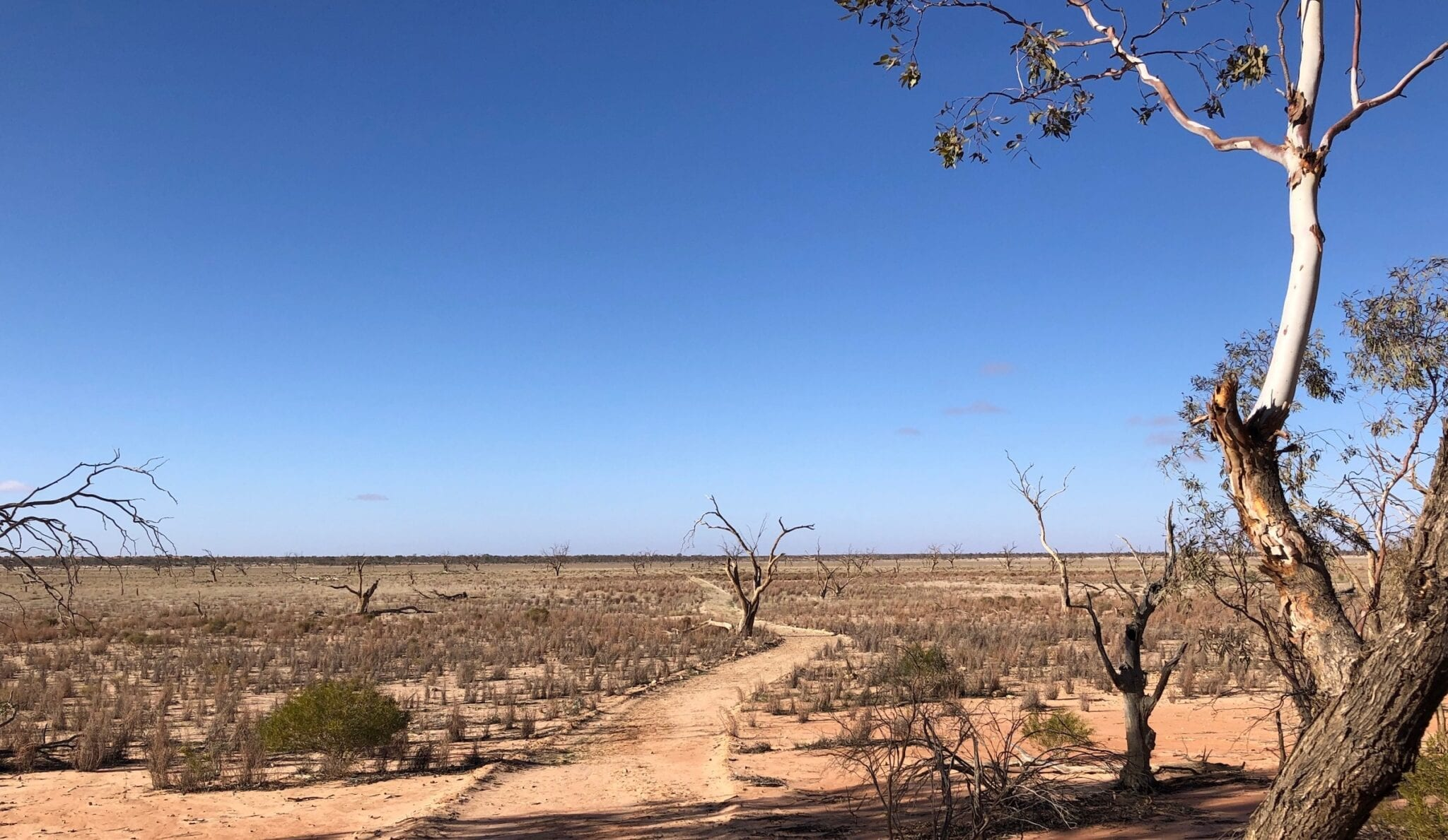 The beginning of the long walk across the lake bed. Lake Pinaroo, Sturt National Park NSW.