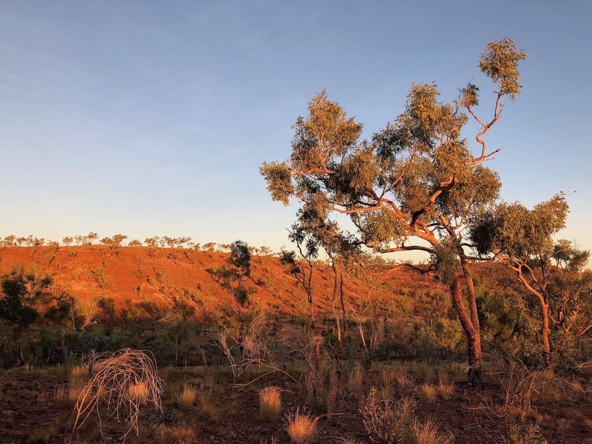 The colours of Judbarra / Gregory National Park are unbelievably beautiful.