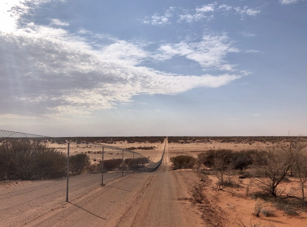 Checking the vermin/feral-proof fences at Wild Deserts, Sturt National Park NSW. Part of our caretaker role.