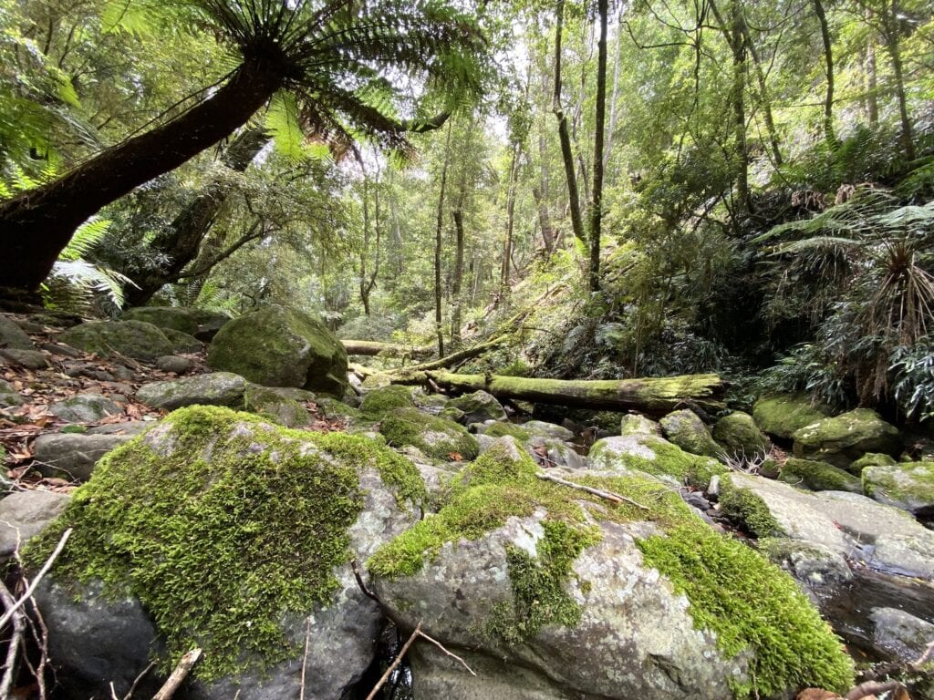 The magical moss-covered Five Day Creek. Cascades Walking Track, New England National Park, NSW.