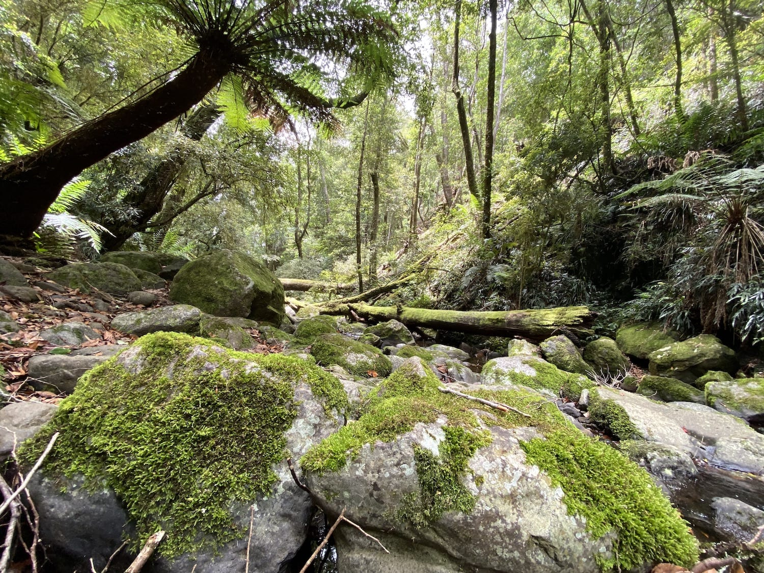 The magical Five Day Creek. Cascades Walking Track, New England National Park, NSW.