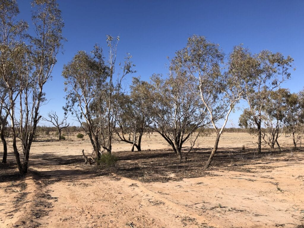 The dry lakebed of Lake Pinaroo before it filled.