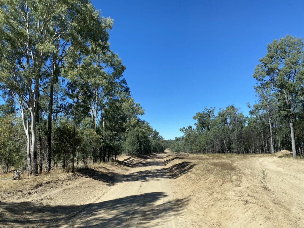 A sandy section of Westgrove Road on the way to Mount Moffatt, Carnarvon Gorge National Park, QLD.
