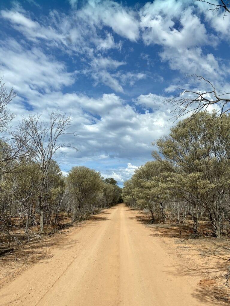 The drive through mulga scrub to Bullock Gorge, Idalia National Park QLD.