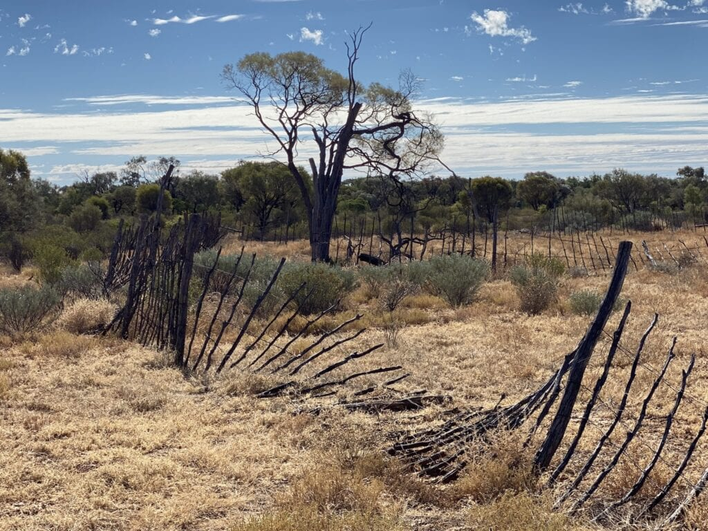 An unusual stake stockyard at Idalia National Park, QLD.